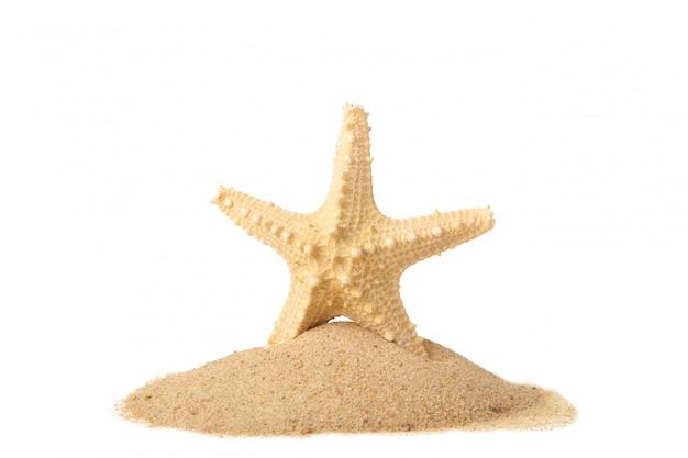 Rozgwiazda z piaskiem odizolowywającym z kopii przestrzenią. koncepcja lato
