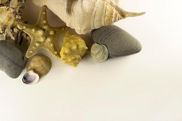 Rozgwiazdy, muszle i kamienie na białym tle. koncepcja podróży. projekt, ocean.