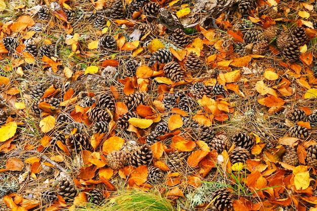 Rożki z jesień liśćmi na ziemi w lesie