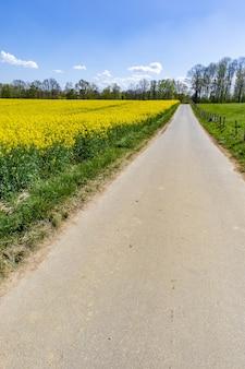 Rozległe pole z żółtymi kwiatami w ciągu dnia