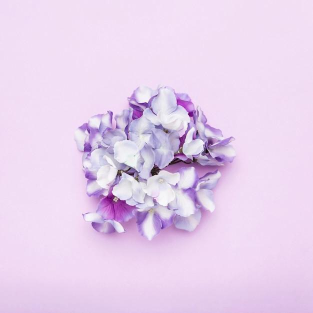 Rozmieszczenie kolorowych kwiatów