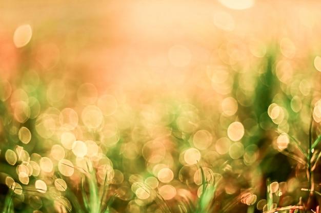 Rozmycie kropli rosy trawy spadają na zielone liście i słońce światło w wschodzie słońca