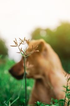 Rozmycie mały pies spójrz w ogrodzie czymś słonecznym.