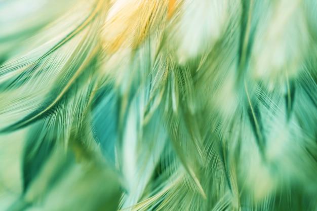 Rozmycie ptaki kurcząt pióro tekstury na tle, fantasy, streszczenie, miękki kolor sztuki projektowania.