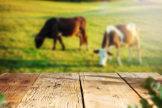 Rozmycie sceny krów na zielonej trawie i stole