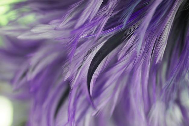 Rozmycie stylów i miękkich kolorów kurcząt pióro tekstury na tle