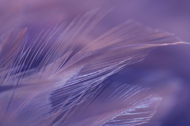 Rozmycie tekstury piór ptaków kurczaków dla