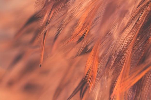 Rozmycie tekstury wtapianie kurczaków ptaków na tle