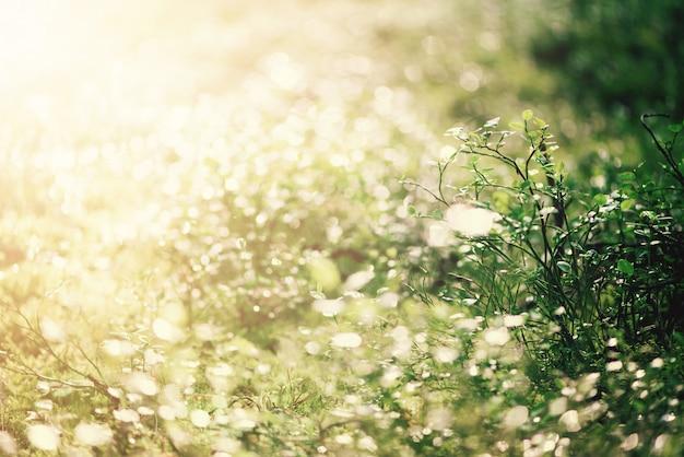 Rozmycie zielone liście z bokeh, abstrakcyjne tło. transparent. dzika natura.