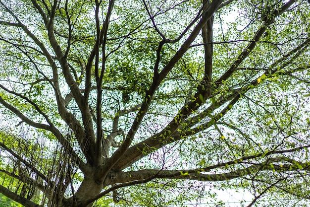 Rozmyj dużą gałąź i liść, aby uzyskać zieloną naturę