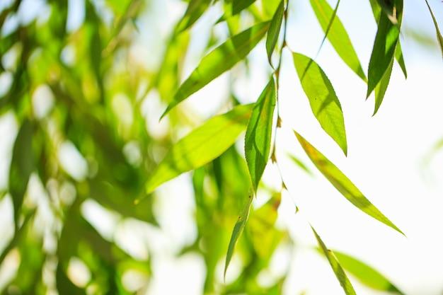 Rozmyta scena ze świeżymi liśćmi i błękitnym niebem, idealna na tło natury