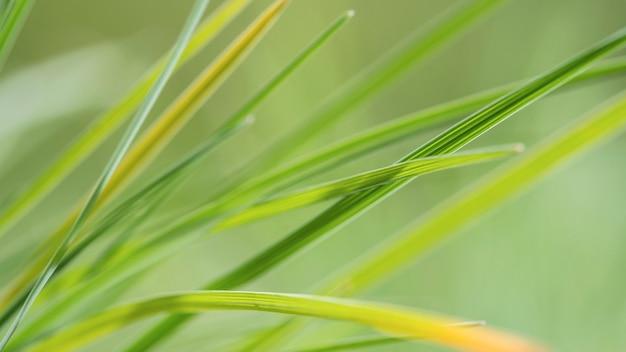 Rozmyte liście zielonej trawy