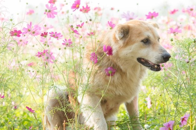 Rozmyty pies i kwiat dla tła