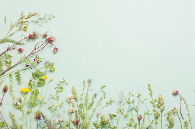 Różne dzikie kwiaty na tle papieru