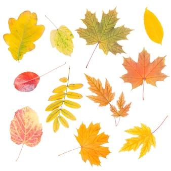 Różne jesienne liście na białym tle na białym tle do projektowania