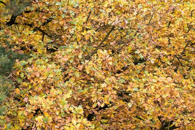 Różne jesienne pożółkłe liście w lesie, piękna prawdziwa przyroda w lesie liściastym