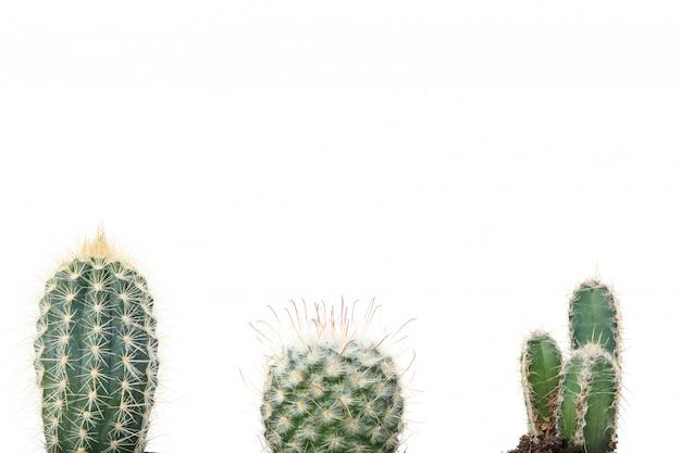 Różne kaktusy na białym tle. rośliny domowe