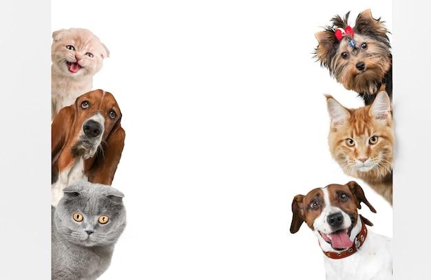 Różne koty i psy jako ramka na białym tle