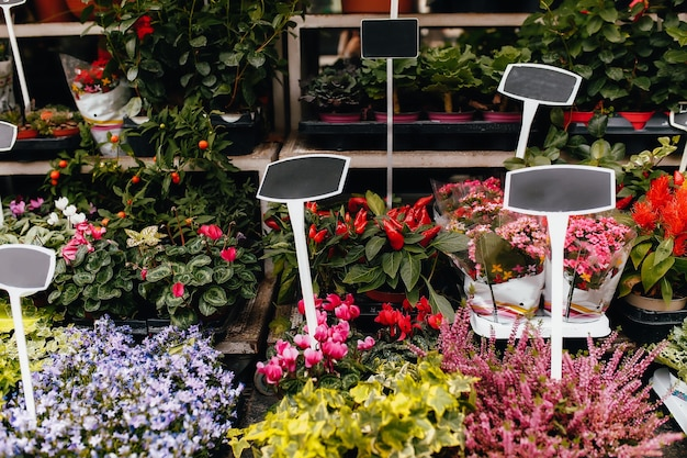 Różne kwiaty w oknie wystawowym sklepu z pustymi metkami z cenami. wysokiej jakości zdjęcie