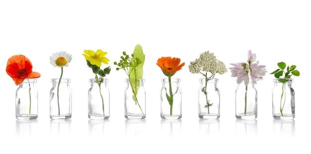 Różne lecznicze kwiaty w małych szklanych butelkach na białej ścianie