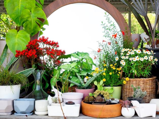 Różne małe doniczki ceramiczne i terakotowe z kwiatami i zieloną rośliną w pobliżu okrągłej dekoracji lustra w ogrodzie.