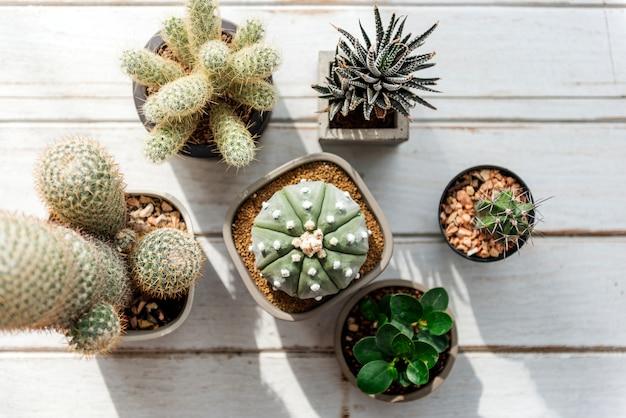 Różne małe kaktusy