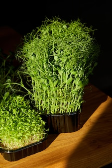 Różne microgreeny w tacach na drewnianym stole, twarde światło, zbliżenie, kopia przestrzeń. ogrodnictwo domowe, wegańskie, zdrowa żywność, superfoods.