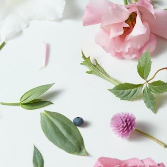 Różne miękkie kwiaty i liście rozrzucone na białej powierzchni, widok z góry.