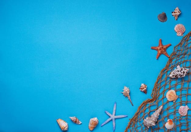 Różne muszle i kabaretki na niebieskim tle