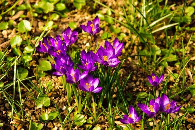 Różne pierwsze wiosenne kwiaty rosną w glebie z bliska w parku narodowym. shallow dof