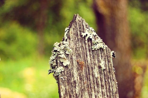 Różne rodzaje mchów rosnących na korze starego drzewa, makro