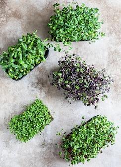 Różne rodzaje mikro zieleniny na tackach kiełkowanie nasion w domu