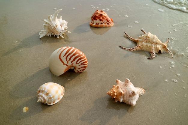 Różne rodzaje pięknych naturalnych muszli na mokrej, piaszczystej plaży