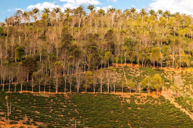 Różne rolnictwo na zboczu wzgórza