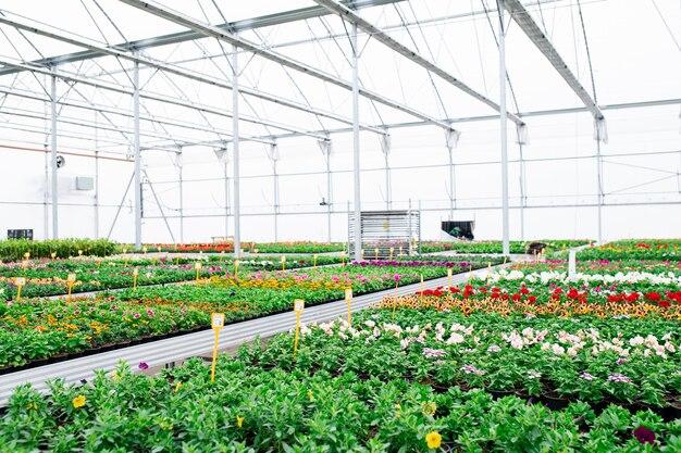 Różne rośliny doniczkowe i kwiaty w szklarni w centrum ogrodniczym, mała firma.