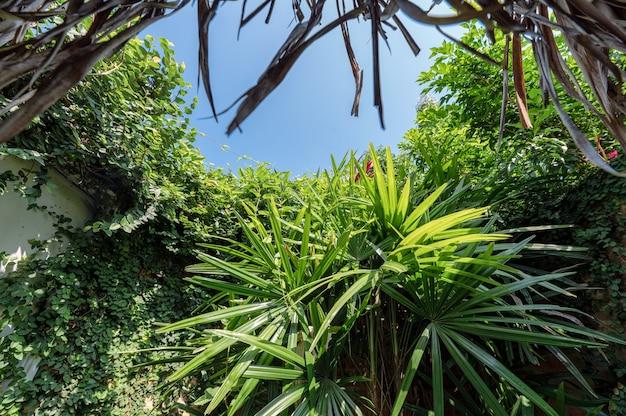 Różne rośliny rosnące na ścianie i niebieskim niebie