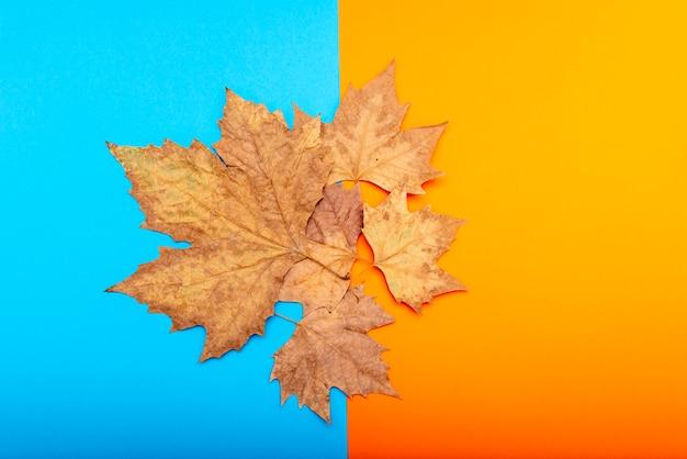 Różne suche liście na niebieskim i pomarańczowym tle