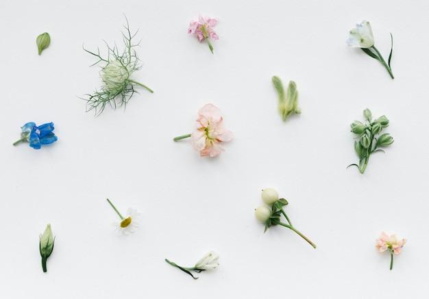 Różne wzory świeżych kwiatów na białym tle
