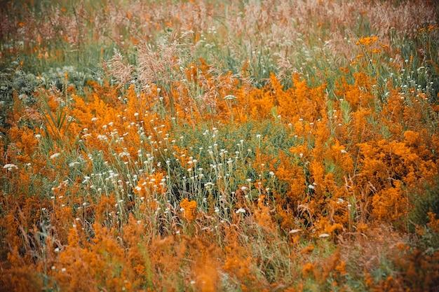 Różne zioła i kwiaty kwitnące na polu, filtr