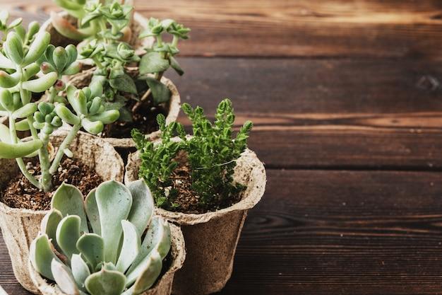 Różnego rodzaju ściany sukulentów kwitnących roślin domowych