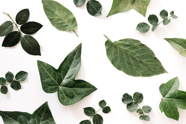 Różni typ zieleń liście odizolowywający na białym tle