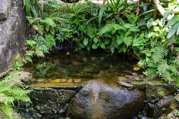 Różnorodna roślinność, kwiaty i drzewa w tropikalnym lesie w parku yanoda, miasto sanya. wyspa hainan, chiny.