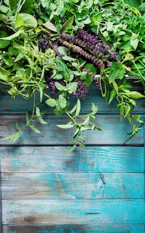 Różnorodne przyprawy zioła szałwia pietruszka produkt rolny