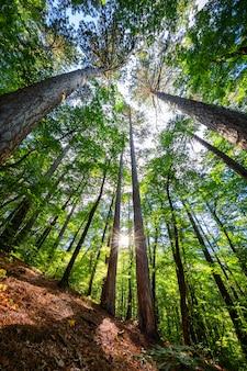 Różnorodność koron drzew w lesie wiosną na tle błękitnego nieba ze słońcem. widok z dołu na drzewa