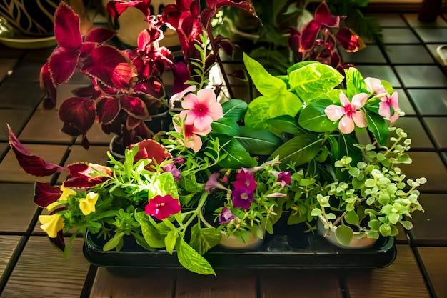 Różnorodność kwitnących kwiatów w pojemniku na sprzedaż w kwiaciarni ogrodniczej
