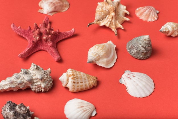 Różnorodność muszelek na tle żywych koralowców. leżał płasko. koncepcja morska