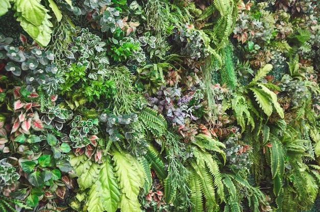 Różnorodność zieleni liście z roślinami dekoracyjnymi na ścianie