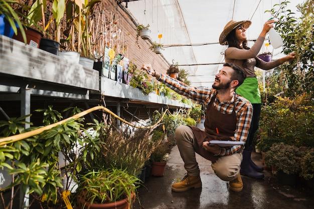 Rozochoceni ogrodnicy pracuje w szklarni