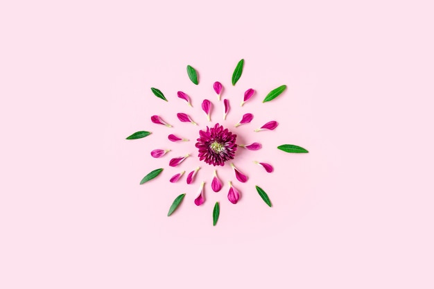 Różowa chryzantema leży pośrodku na pastelowym różowym tle z różowymi i zielonymi płatkami wokół z copyspace,