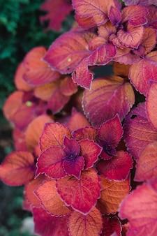 Różowa i fioletowa roślina